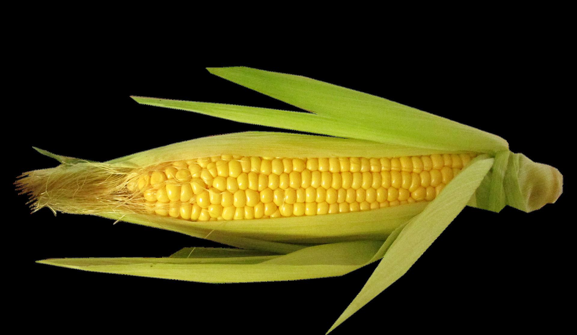 vegetable-2489368_1920